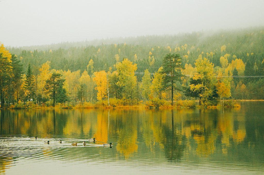 Mùa thu ở hồ Songsvann, Oslo, Na-uy