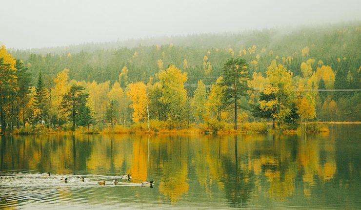 Mùa thu ở hồ Sognsvann, Oslo, Na-uy